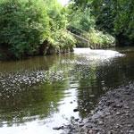 River Dane pimlotts Meadow