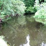 River Dane Robinsons Meadow