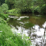 River Dane Robinsons Meadow
